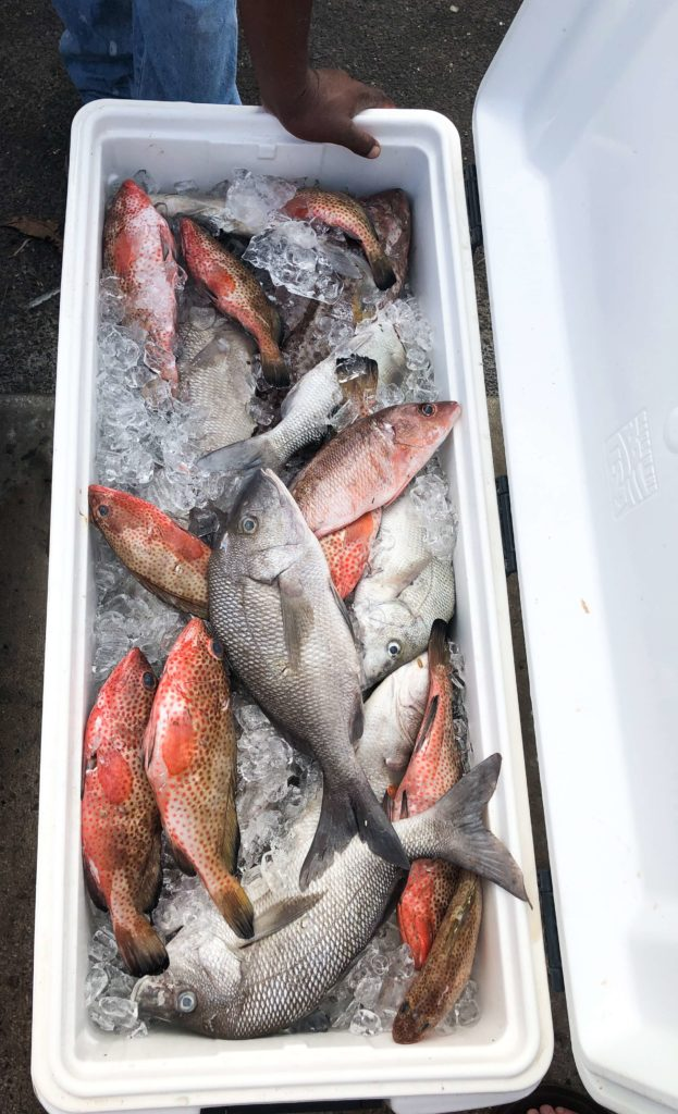 Freshly caught fish in the Bahamas